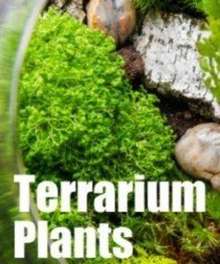 Plantas para Terrarium / Vivarium